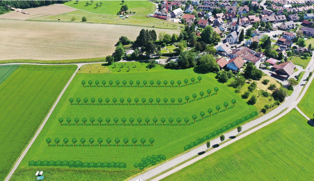 Visualisierung der geplanten Pflanzung